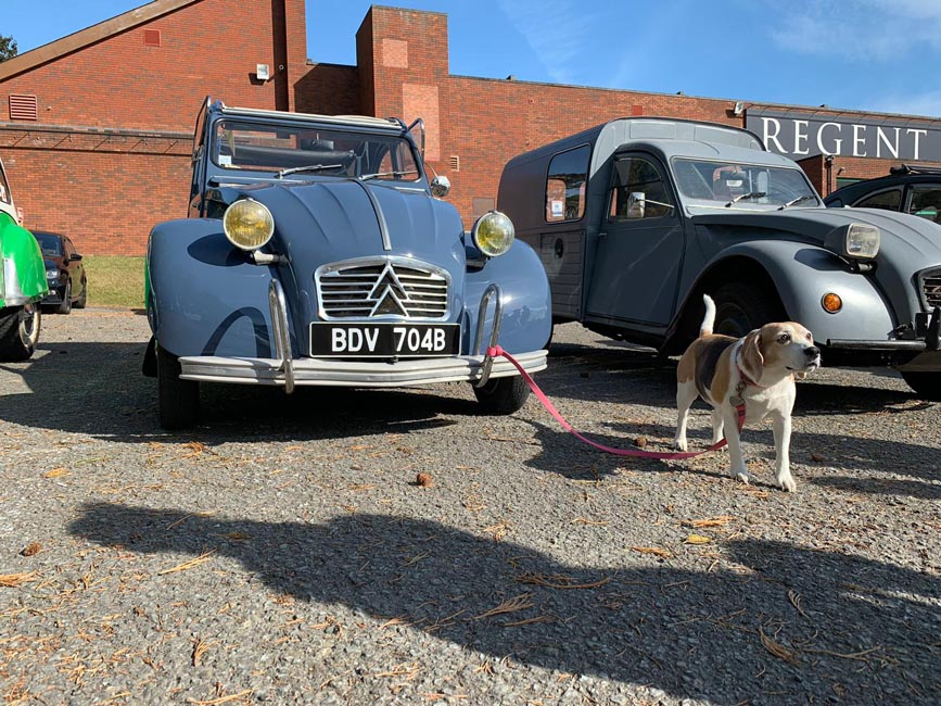 Citroen 2CV with beautiful Beagle